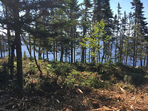 Want to increase the value or improve your view/woodlot?