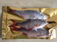 Fishing bait pike sea coarse fresh frozen packs