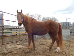 Mare for Sale