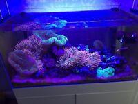 Marine aquarium whole set up