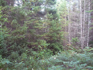Woodlot For Sale PID 40334195