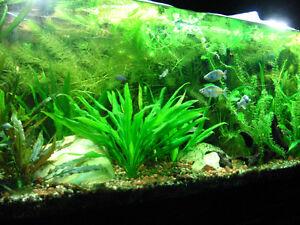 poissons et plantes aquarium