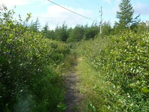 2.3 Acres of land in Holyrood- Zoned Mixed Development