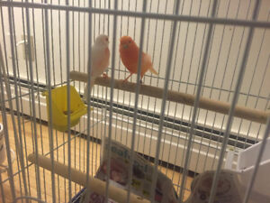 2 Canaries