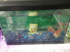Fish tank available