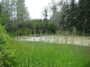 Almost 12 Acre Lot with Pond and year-round Access