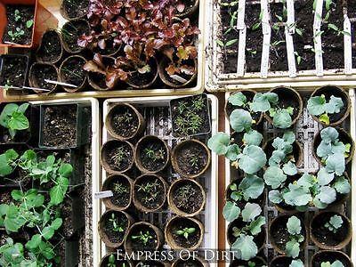 Unterteile Deine Gemüsesamen in drei einfache Gruppen.