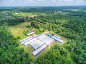 Hemmingford, entreprise horticole à vendre, établie depuis + 28