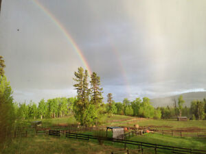 Single Tree Ranch Horse Boarding with access to endless trails.