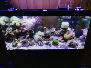 45 Gal Reef Tank + Corals and Fish-- SOLD !