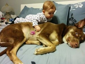famille avec vieux chien cherche maison