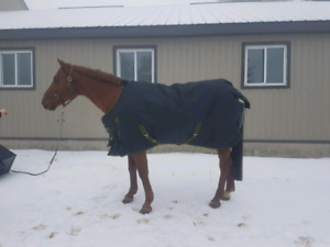 Brand new horse blankets for sale