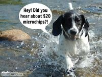 $20 Microchip Clinic At The Kingston Humane Society
