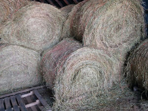 High quality Hay round bales 4x5