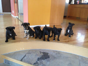 Puppies ready to go.