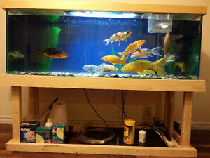 120+ Gallon Fish Tank + Custom Built Wood Stand (fish optional)