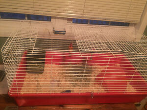 Guinea pig or Small animal cage