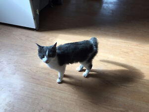 Cat Found in Colpitts Settlement Wed eve March 8/17