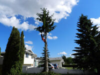 TREE REMOVALS - DISCOUNT UNTIL MAR 31ST - BOOK NOW!