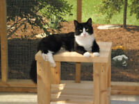 Adult Volunteers Needed at Cat Shelter in Marsville