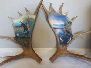 Moose horns hand painted