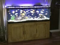 Great deal - fully equipped 130 gallon fish tank!