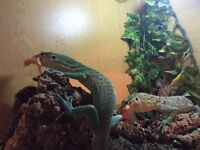 Green tree monitor pair full set up swap for boat