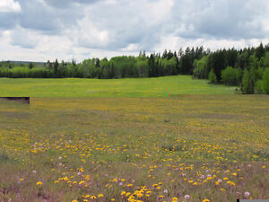 A beautiful 460 acres in the Cariboo