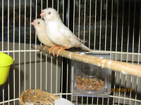 Different Kinds of Finches