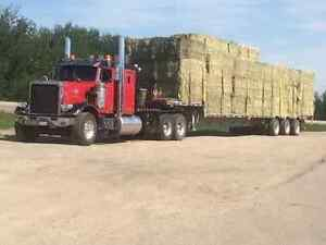 Horse Hay(No Rain,Dust,Weeds,Mold) $100 per bale delivered price Edmonton Edmonton Area image 5