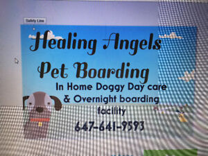 Home Pet boarding: Doggy day care and Boarding