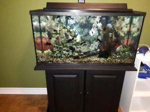 Fish aquarium and stand