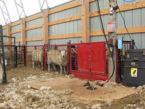PROFESSIONAL SHEARING / CERTIFIED NEW ZEALAND SHEARER Belleville Belleville Area image 2