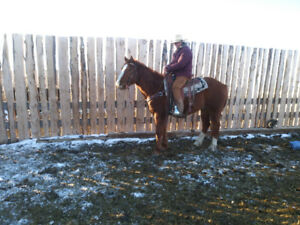 7 year old ranch gelding