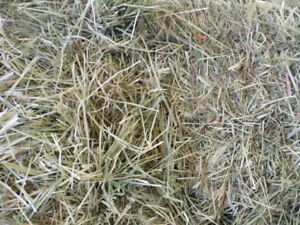 Organic Grass Hay For Sale