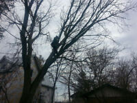 Out of the Woods Tree Service