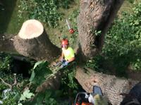 Tree Maintenance & Removal
