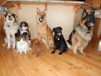 Pampered Pooch In Home Dog Boarding