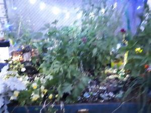 Natural, lush herb garden