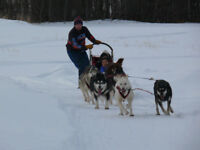 Perservance Dog sled Rides
