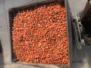 Carrot feed for hunting
