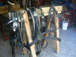 Draft Single Leather Show Harness London Ontario image 4
