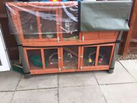 2 boy Guinea pigs and large hutch with cover