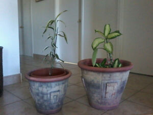pot a plante decoratif