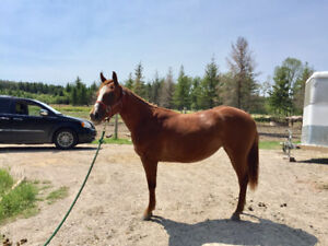 2yr old filly for sale