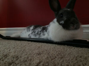 Looking to find a furever home for a rabbit