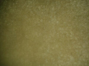 Cream Coloured Area Rug
