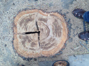 Ajs Tree removal and yard clean up Regina Regina Area image 5