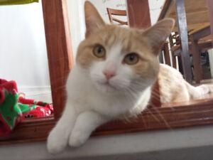 Beautiful cat :)