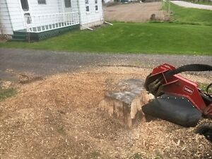 AFFORDABLE STUMP GRINDING AND REMOVAL. Kingston Kingston Area image 9